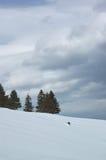 Nubes del invierno y árboles de pino Imagen de archivo libre de regalías