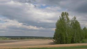 Nubes del m?n tiempo sobre el campo de la primavera almacen de video
