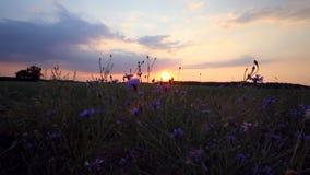 Nubes dramáticas de la puesta del sol sobre prado salvaje del aciano metrajes
