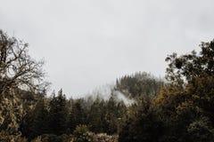 Nubes en el bosque Fotografía de archivo
