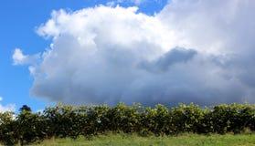 Nubes en el viñedo fotos de archivo