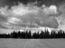 Nubes grandes sobre picea y nieve Imagenes de archivo