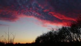 Nubes hermosas flotantes en el cielo sobre los árboles metrajes
