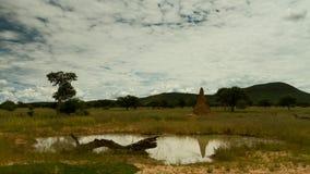Nubes móviles sobre la sabana namibiana en un waterhole metrajes