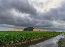 Nubes majestuosas cuando puesta del sol cerca del campo de arroz Imágenes de archivo libres de regalías