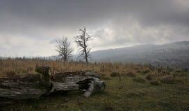 Nubes negras sobre el bosque Imagen de archivo libre de regalías