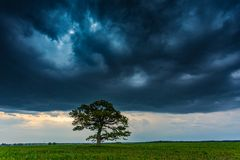 Nubes oscuras de la tempestad de truenos sobre el roble fotografía de archivo