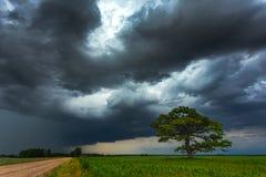 Nubes oscuras de la tempestad de truenos sobre el roble foto de archivo libre de regalías