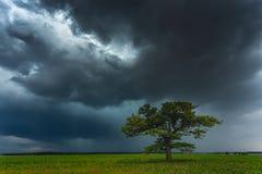 Nubes oscuras de la tempestad de truenos sobre el roble imagen de archivo