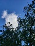 Nubes sobre árbol de pacana imagenes de archivo