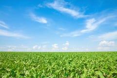 Nubes sobre el campo verde Imagen de archivo