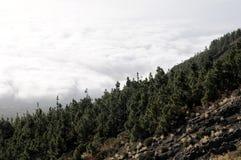 Nubes sobre los árboles Fotografía de archivo