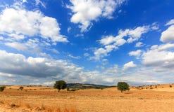 Nubes sobre los árboles Imagenes de archivo