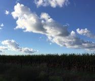 Nubes sobre maíz Foto de archivo