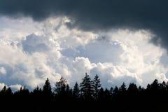 Nubes tormentosas bajo la madera Foto de archivo libre de regalías