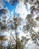 Nubes a través de los árboles Foto de archivo libre de regalías