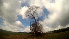 Nubes y árbol flotantes en el viento, timelapse almacen de video