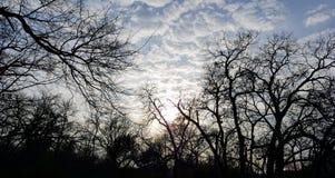 Nubes y árboles imágenes de archivo libres de regalías