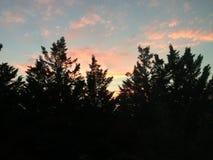 Nubes y árboles de pino rosados fotos de archivo