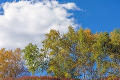 nubes y abedul blanco en el otoño Foto de archivo libre de regalías