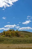 nubes y abedul blanco en el otoño Imagen de archivo libre de regalías