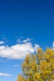 nubes y abedul blanco en el otoño Foto de archivo