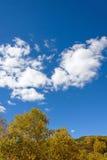 nubes y abedul blanco en el otoño Fotografía de archivo libre de regalías