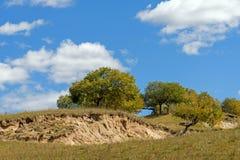nubes y abedul blanco en el otoño Imagen de archivo