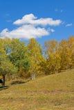 nubes y abedul blanco en el otoño Imagenes de archivo