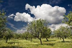 nubes y almendros Стоковое фото RF