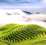 Nubes y jardín de té dramáticos Imagen de archivo libre de regalías