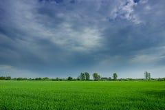 Nubes y lluvia sobre un campo verde fotografía de archivo