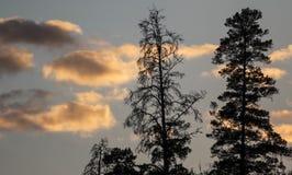 Nubes y siluetas de los árboles en la puesta del sol Imagen de archivo