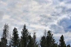 Nubes y tops del árbol en Colorado Foto de archivo