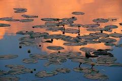 Nubi arancioni Fotografia Stock Libera da Diritti