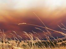 Nubi del fuoco Fotografia Stock