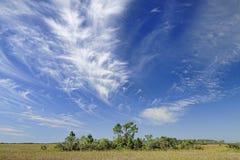 Nubi di cirro sopra i terreni paludosi della Florida fotografia stock libera da diritti