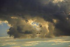 Nubi di tempesta Immagini Stock Libere da Diritti
