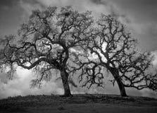 Nubi di tempesta che si raccolgono intorno agli alberi di quercia su una collina Fotografia Stock