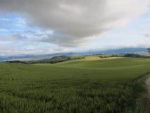 Nubi drammatiche sopra il campo di frumento Immagini Stock