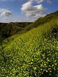 Nubi e valle gialla Fotografia Stock