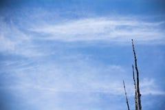Nubi lanuginose bianche nel cielo blu Fotografia Stock