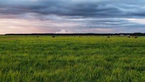 Nubi verdi di tempesta e del campo Fotografia Stock Libera da Diritti