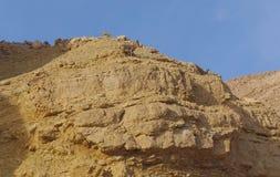 Nubian高地山羊在Nahal Shani,在埃拉特附近的红色峡谷走 免版税库存图片