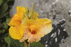 Nublado de dÃa de l'ONU d'en de Flor Amarilla image stock