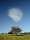 Nuble-se acima da árvore só no verão no vértice do monte verde Fotografia de Stock