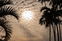 Nuble-se o scape atrás de uma silhueta das palmeiras na laranja foto de stock