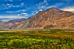 Nubra Valley-5/2011 Royalty Free Stock Photo