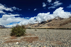 Nubra valley in Himalayas. Ladakh, India Stock Images