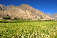 Nubra Valley in Ladakh,india Royalty Free Stock Photo